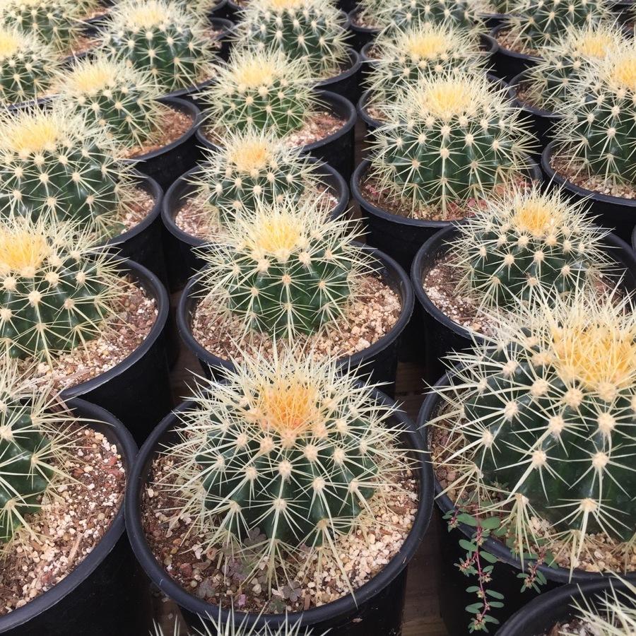 succulents-11.JPG