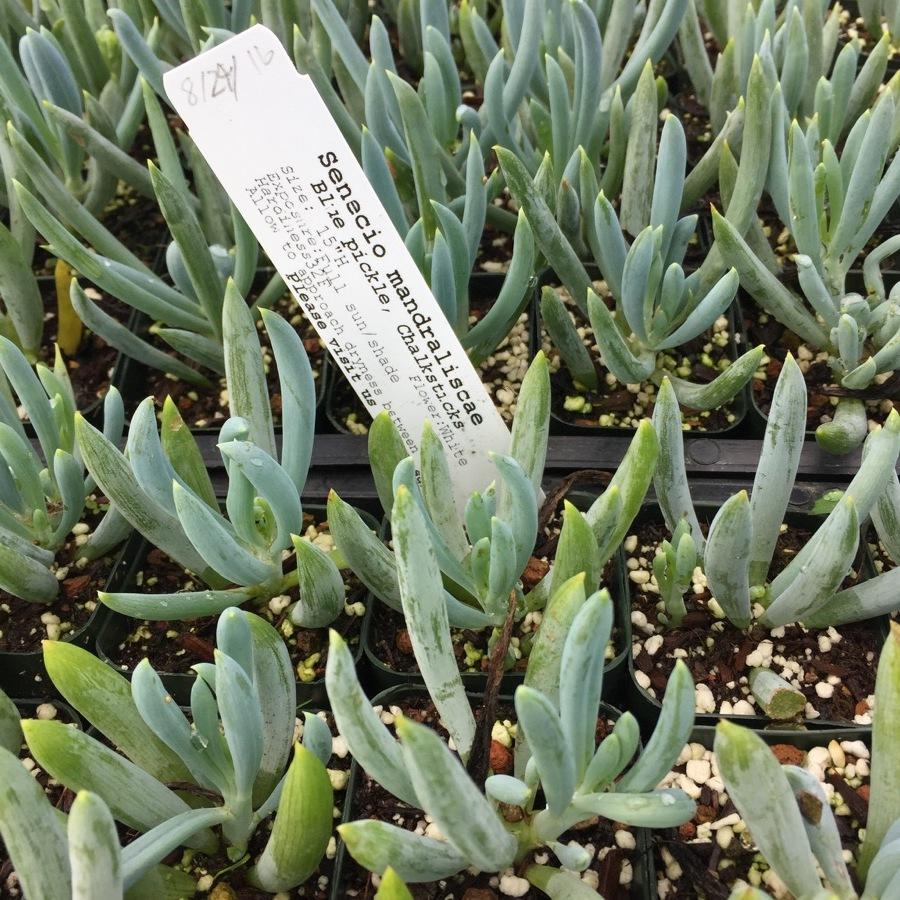 succulents-12.JPG