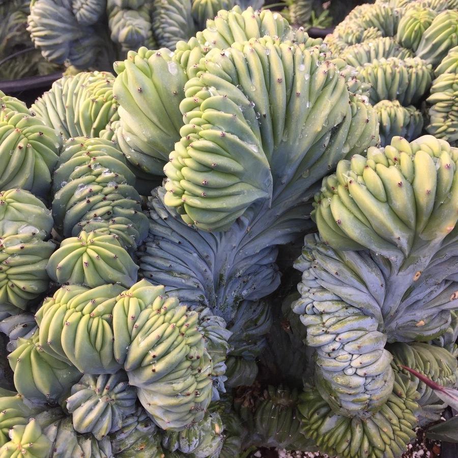 succulents-19.JPG