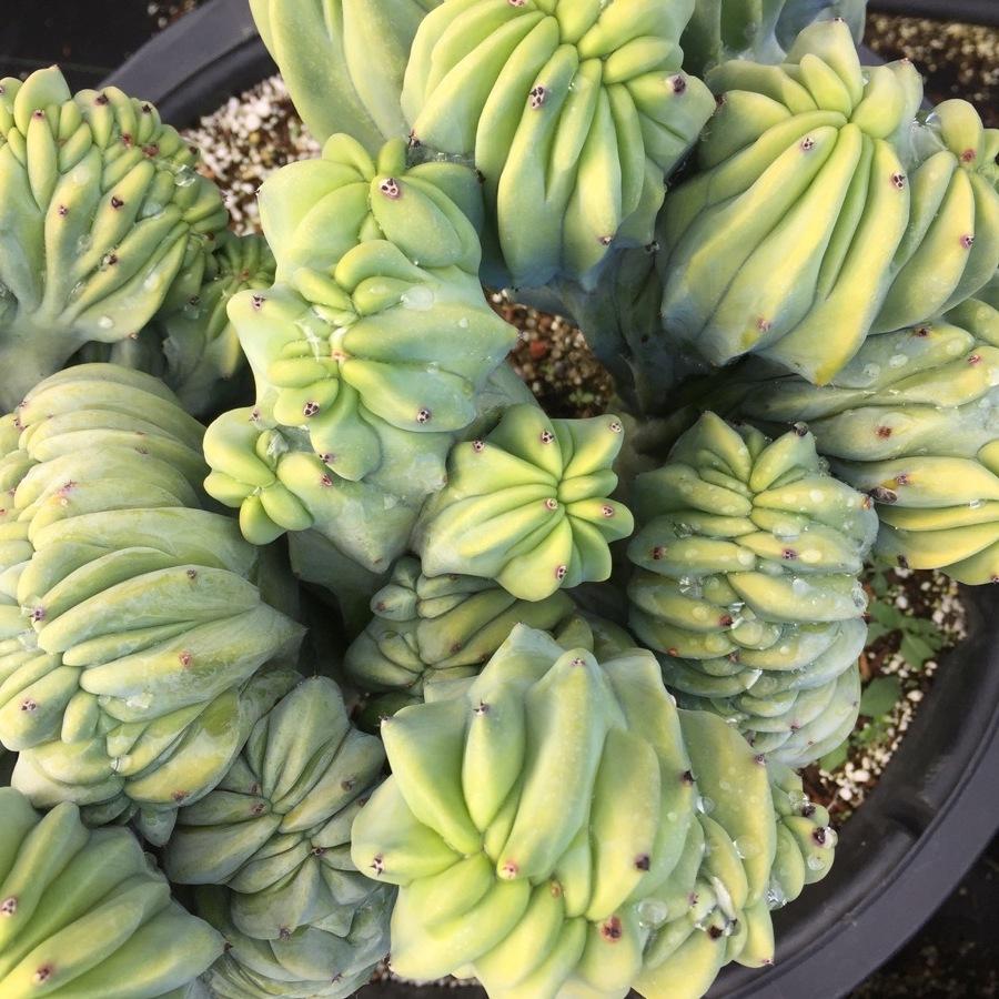 succulents-21.JPG