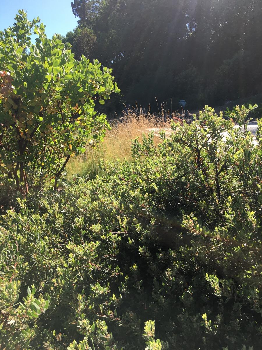 Arterra-Landscape-Healdsburg-Garden-08.jpg