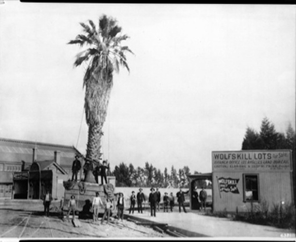 San Pedro palm being brought to Fifth Street and Central Avenue for depot, 1889 | Courtesy of USC Libraries Special Collections