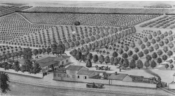 Drawing depicting William Wolfskill's Pasadena orange and lemon grove and residence, between Alameda and San Pedro Streets, Los Angeles, circa 1882 | Courtesy of USC Libraries Special Collections