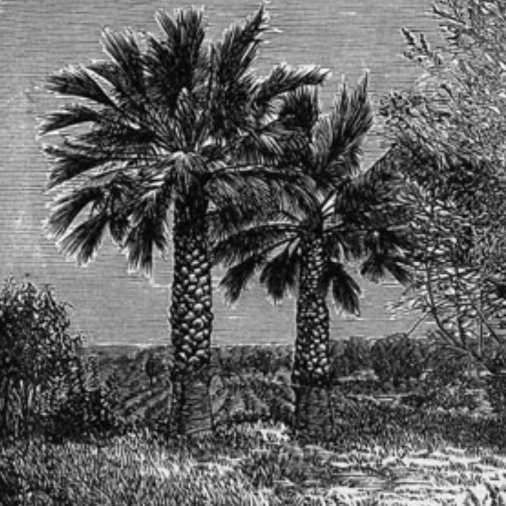 Subtropical - Project Origins