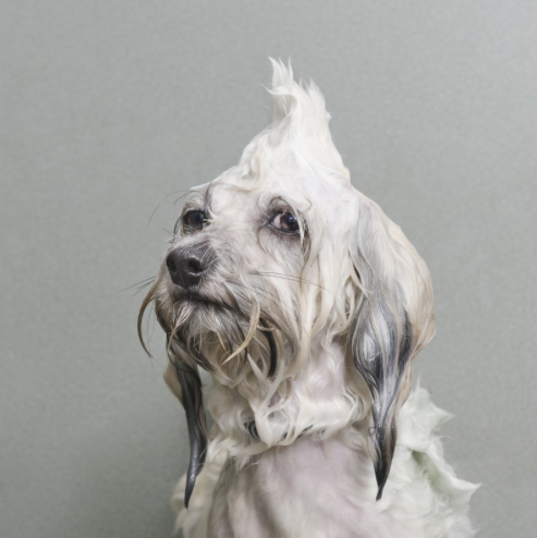 Photo courtesy of Sophie Gamand, Wet Dog Series