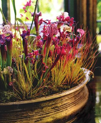 Floral Arrangement by Brandon Pruett