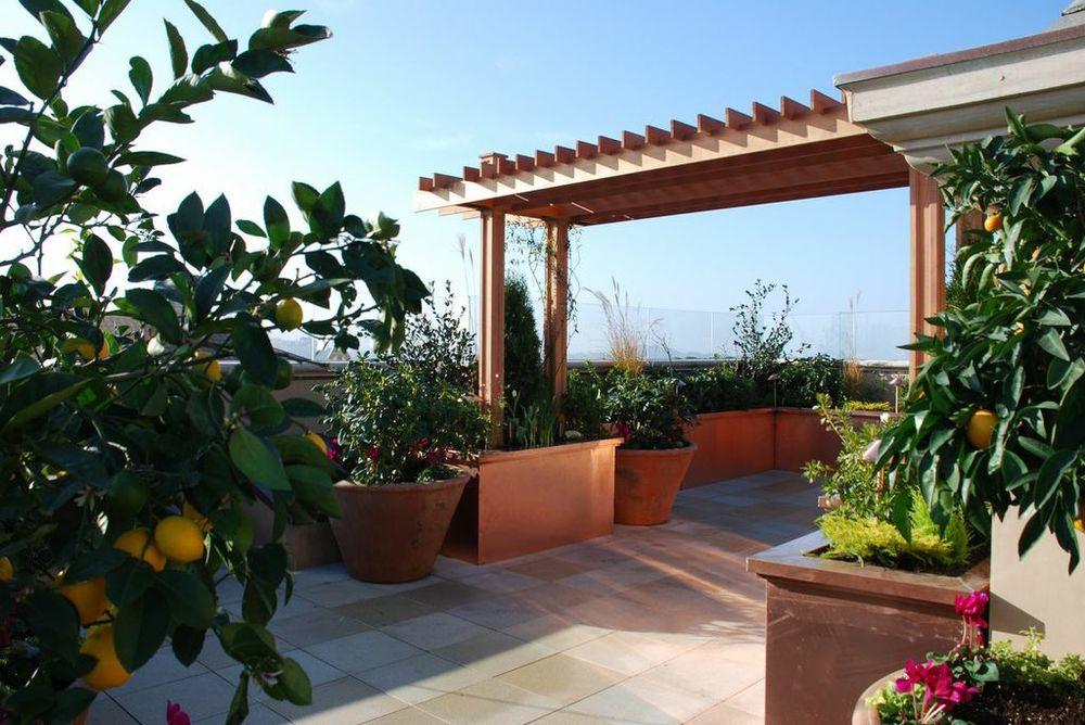 Rooftop Vineyard