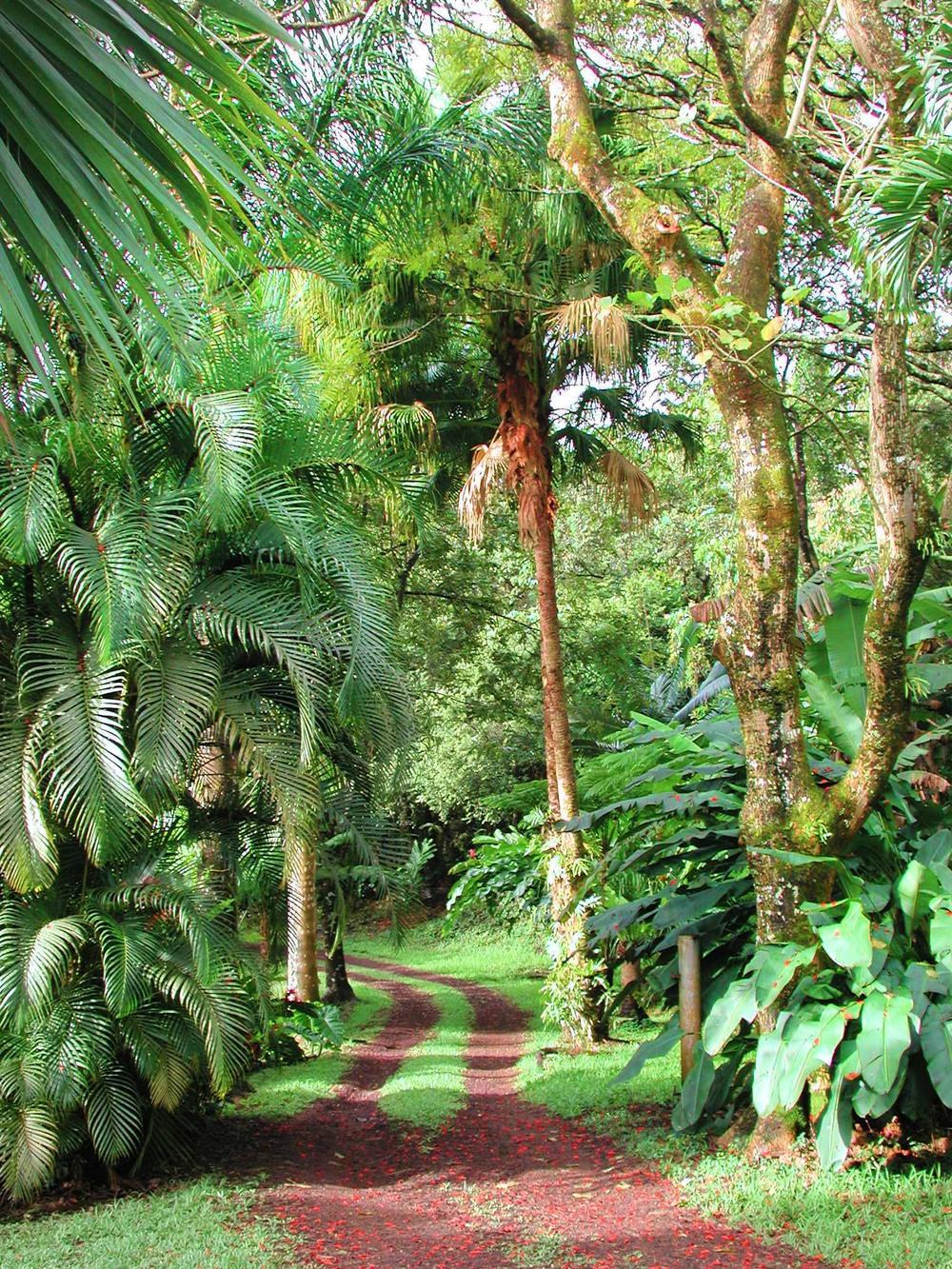 Big Island Botanical Retreat