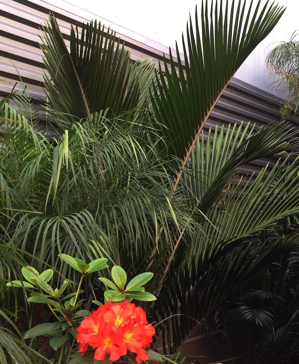 Shaving Brush and Phoenix Roebellini Palms