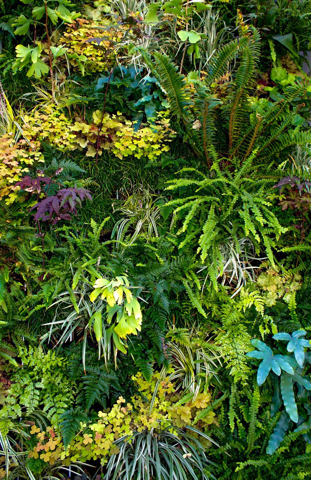 lush-foliage-Lindsey-Graves