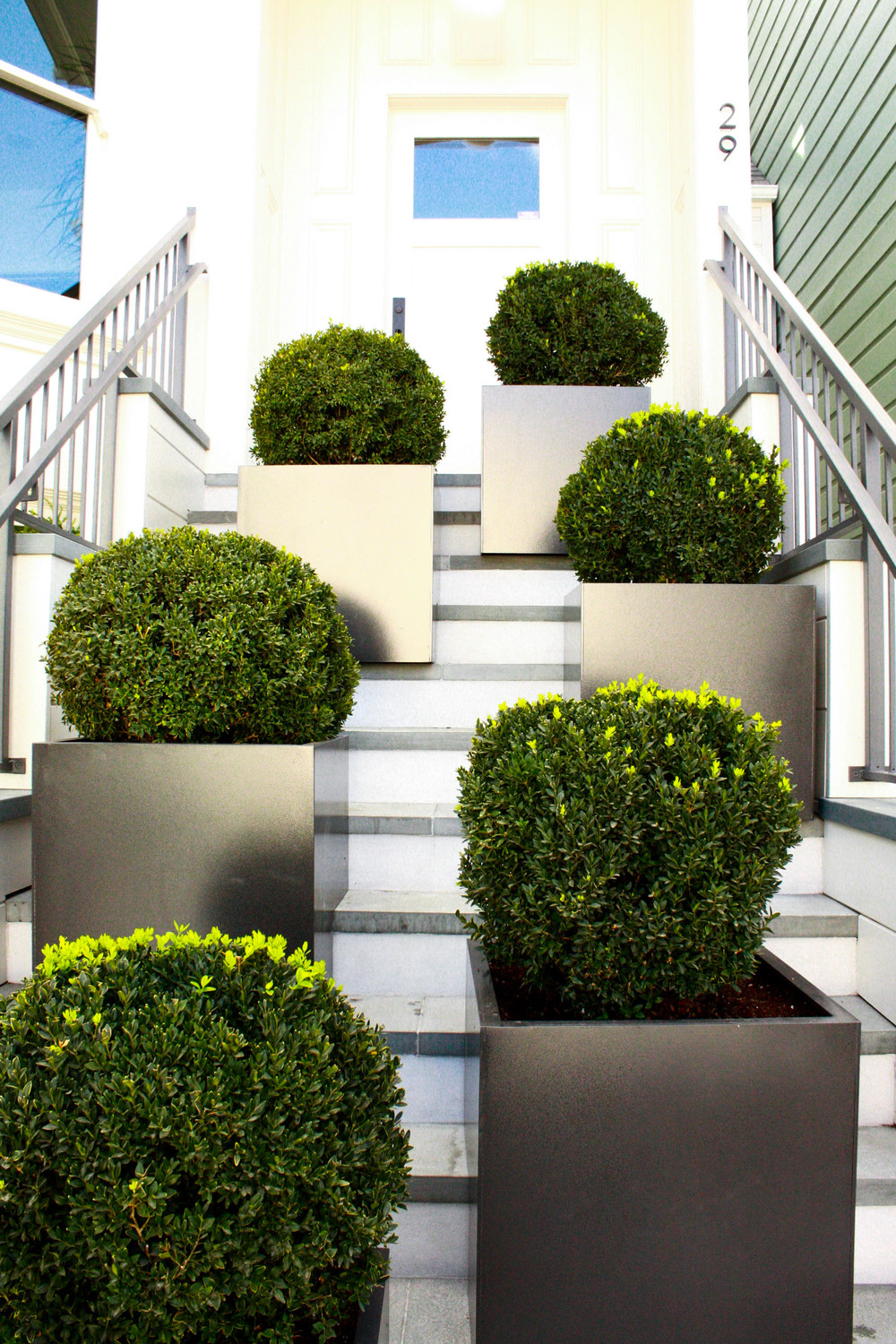 Staggered Boxwood Spheres on Entry Stairs