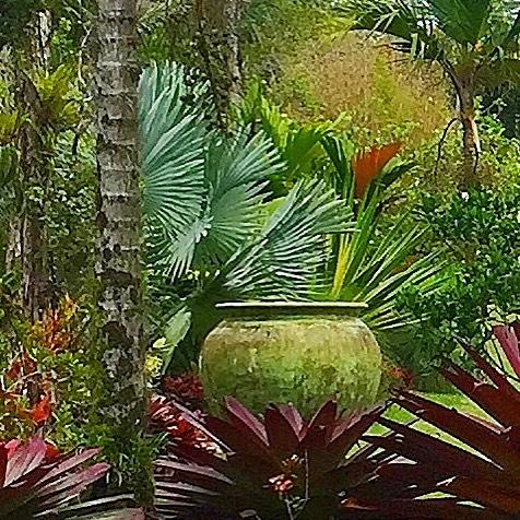 #livinggreendesign #sanctuarygardens #bromeliads #gianturn #caststone #bismarkia #exoticplants #exoticgarden #livingitup #otherworldly