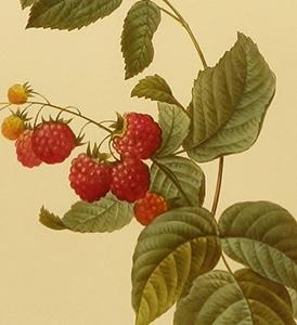 raspberry.jpg
