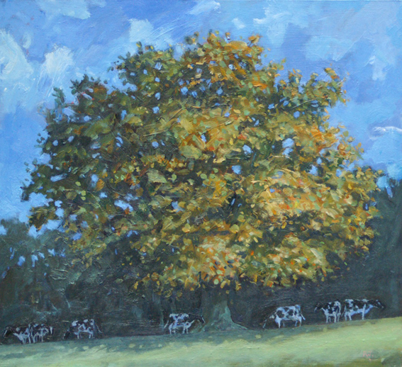 Autumn Oak and Cows