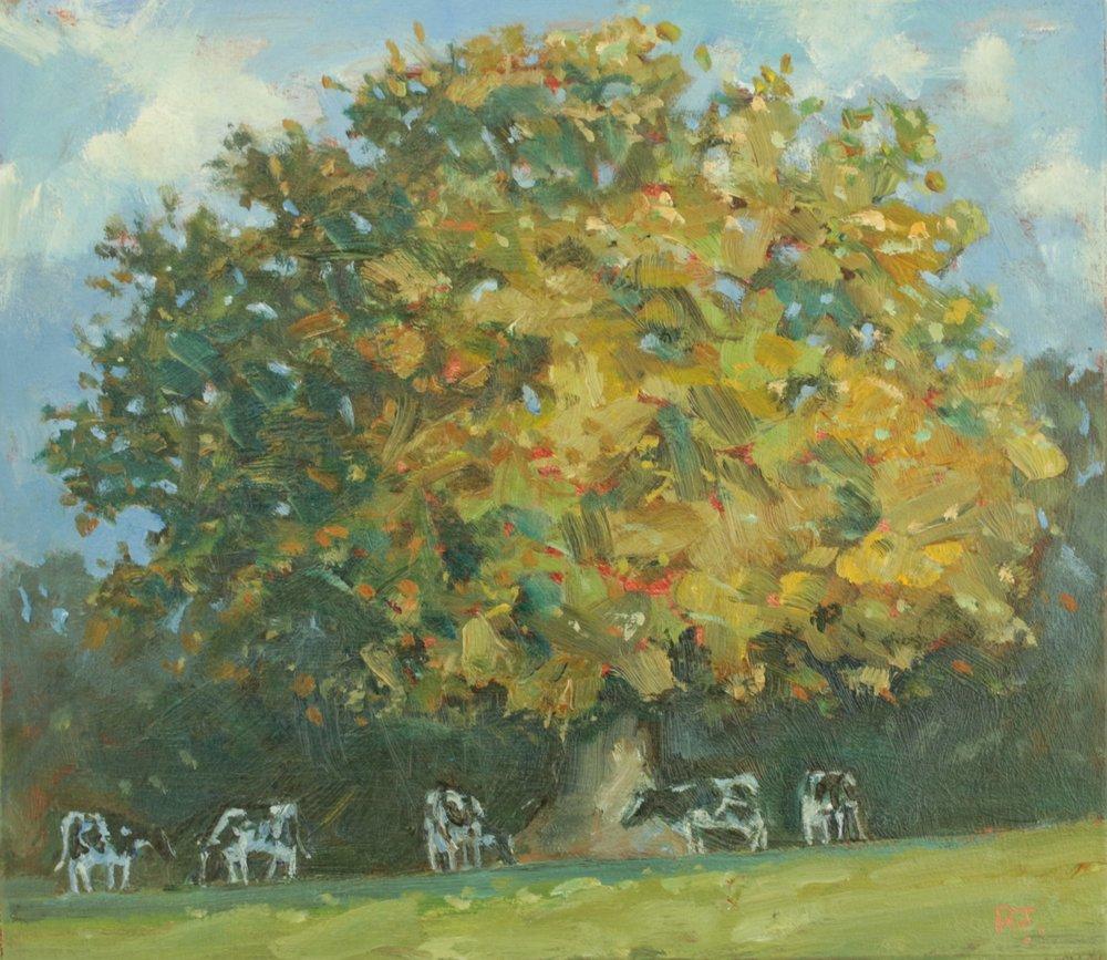 133. autumn oak and cows II