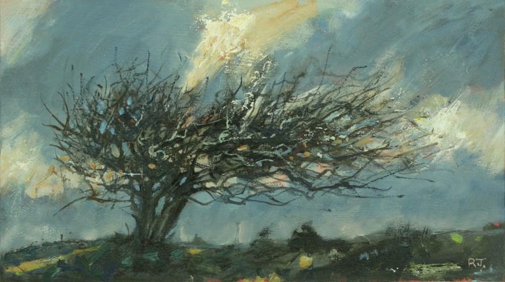 58. windblown tree