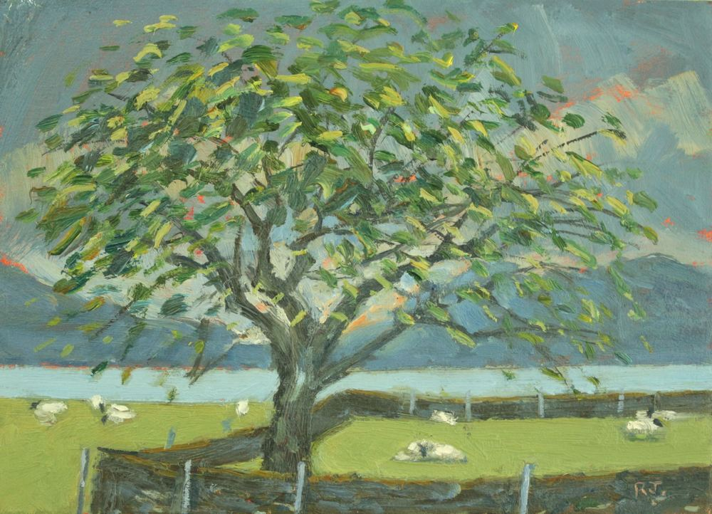 63. sheep and cherry tree, appin farm