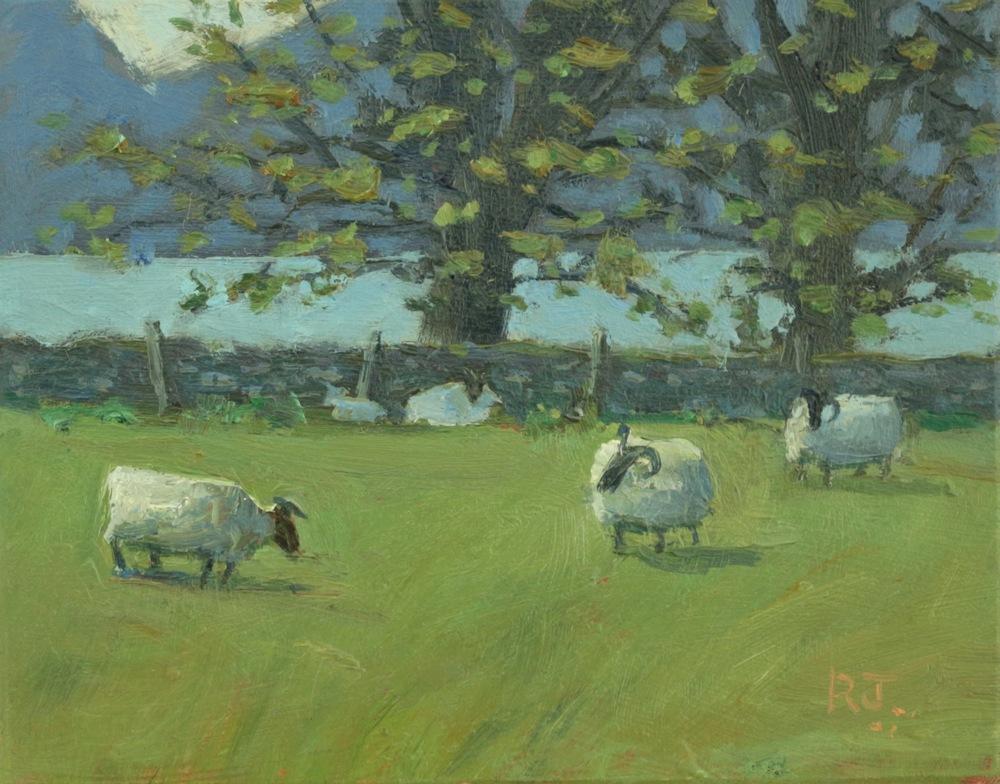 64. sheep farm, appin II