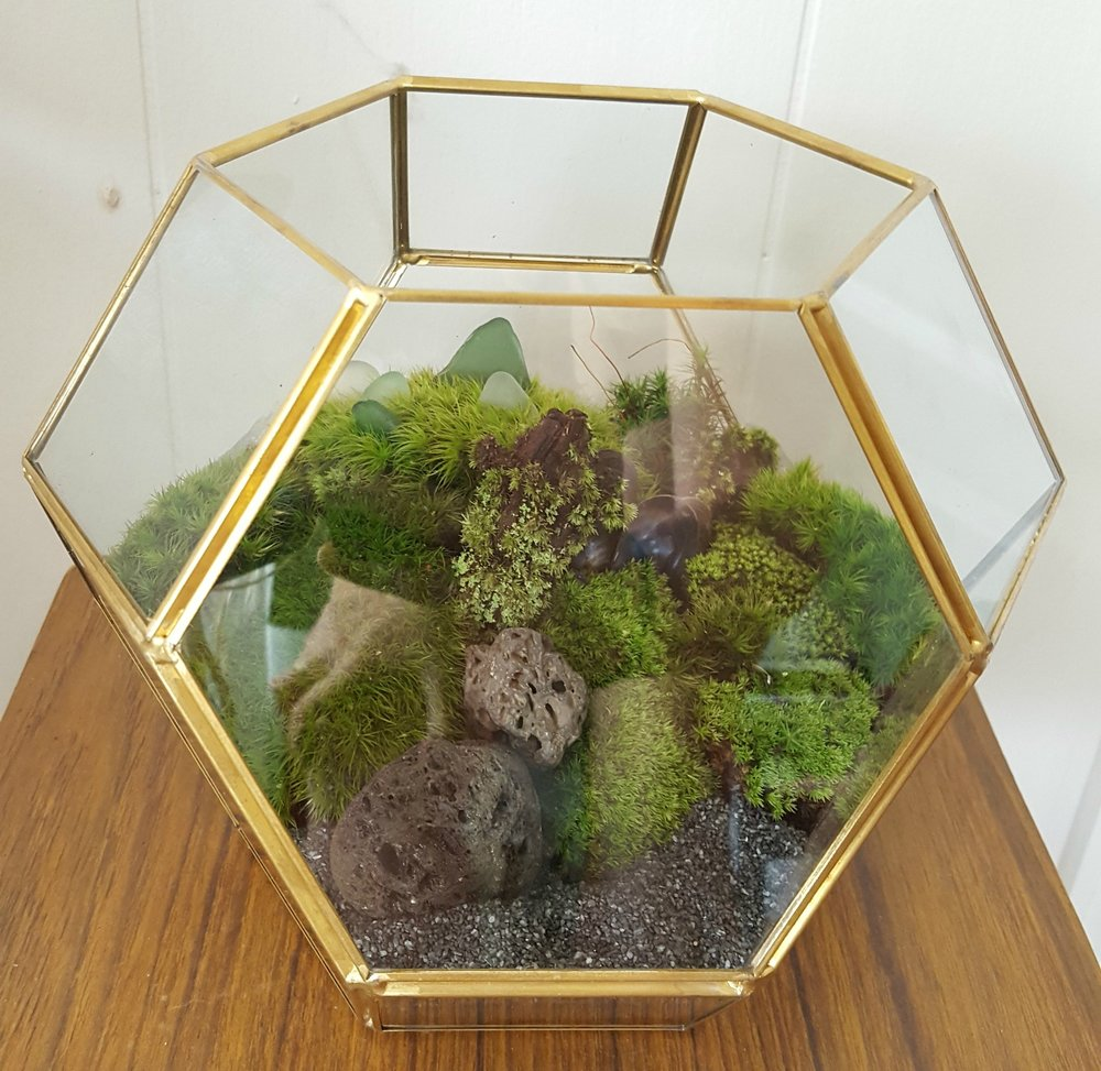 Using Different Living Plants, We Will Create Terrariums With A Variety Of  Materials. We Will Have The Option Of Creating A Desert Habitat, With The  Use Of ...