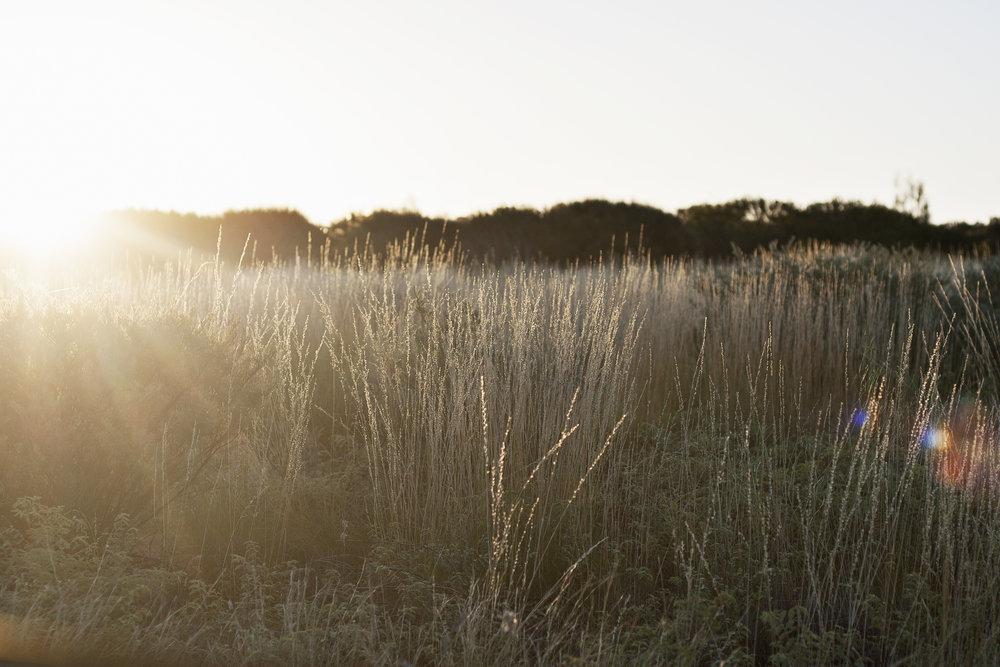 grassy field.jpg