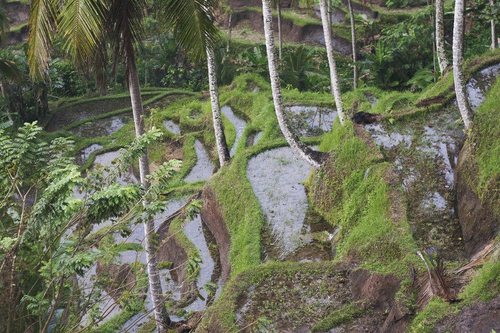 terraces.jpg
