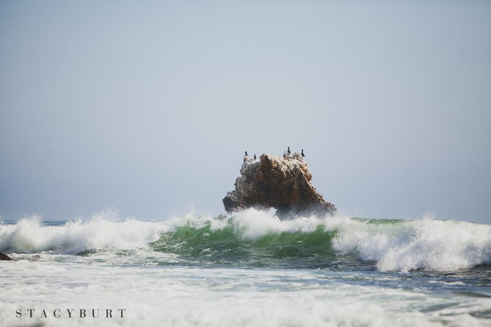 #pelicans #coronadelmar