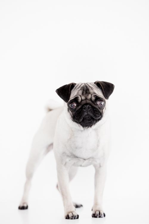 Tim+Pascoe+Dog+Shot.jpg