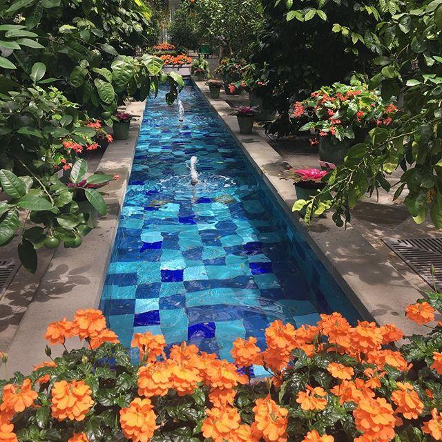 Refreshing. #lifeindc #usbotanicgarden