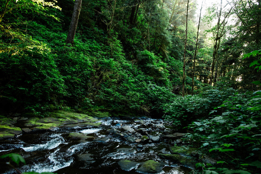 Oregon-Coast-0436.jpg