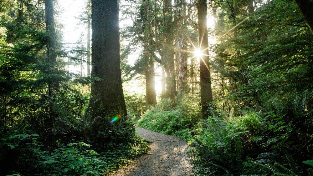 Oregon-Coast-0490.jpg