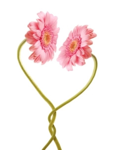 Gerbera Heart Flowers.jpg