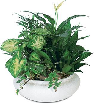 Plant Hamper