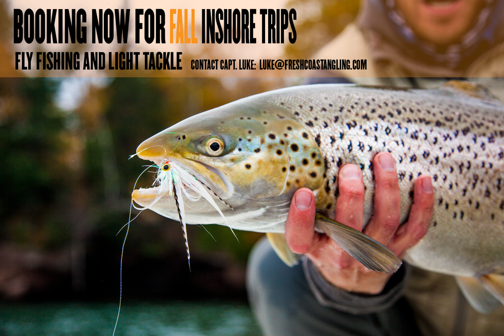 We're now booking Fall Inshore trips.  Contact Capt. Luke:  luke@freshcoastangling.com