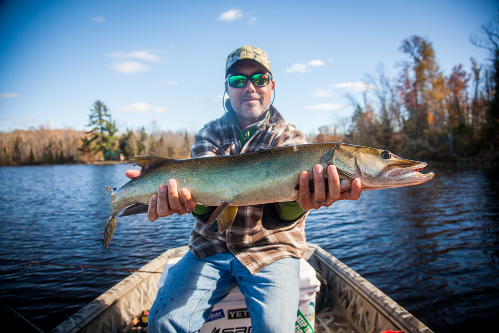 Kelly stuck this great little musky on the fly on a recent fall day.