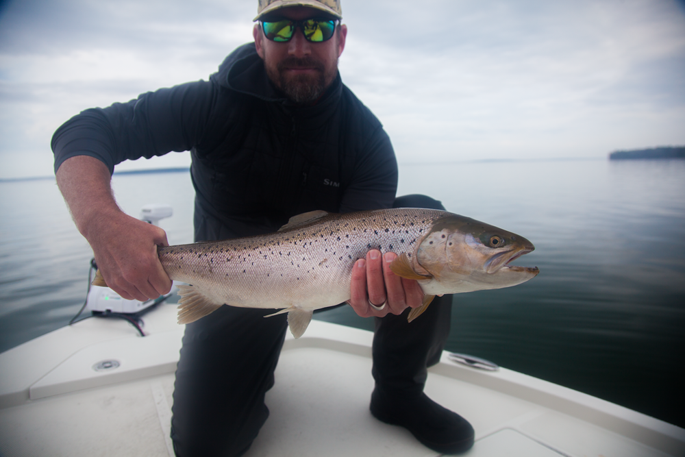 A great brown caught while casting the shallows with Capt. Luke Kavajecz.  Email luke@freshcoastangling for information on guided light tackle and fly trips for these special fish.