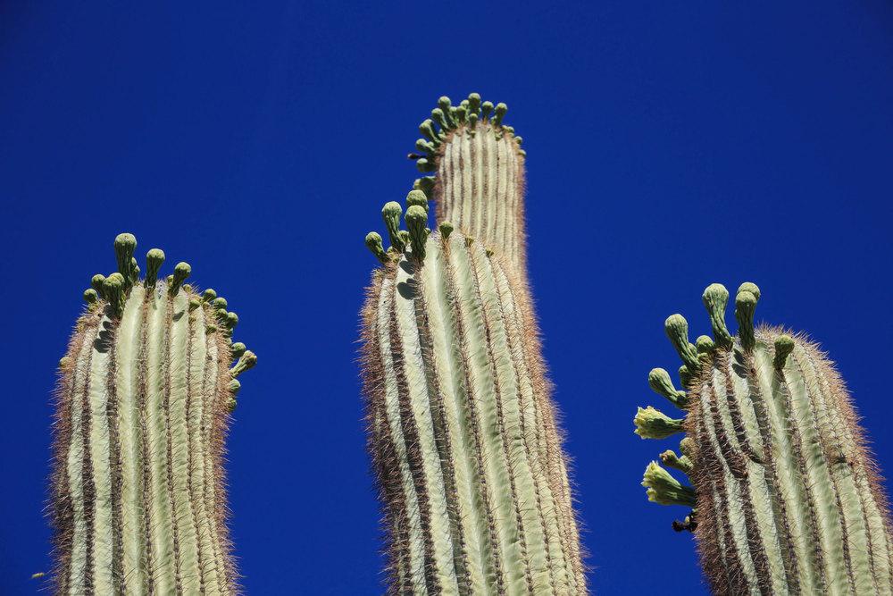 saguaro-5.jpg