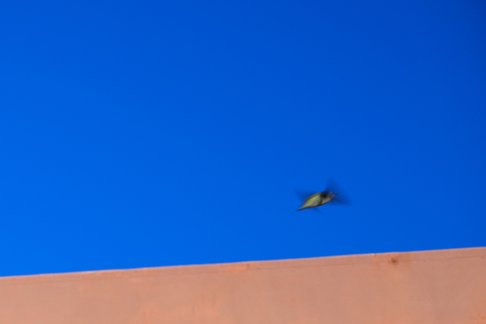 birds-8zoom.jpg