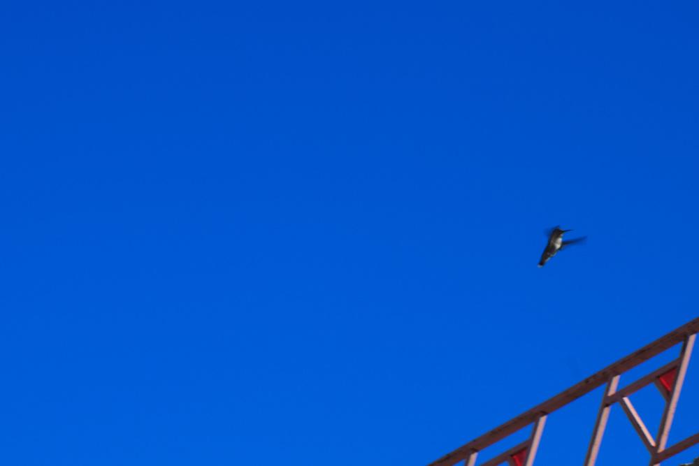 birds-9zoom.jpg