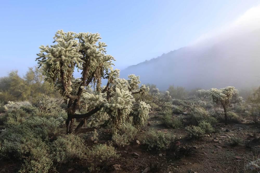 desert_life-5.jpg