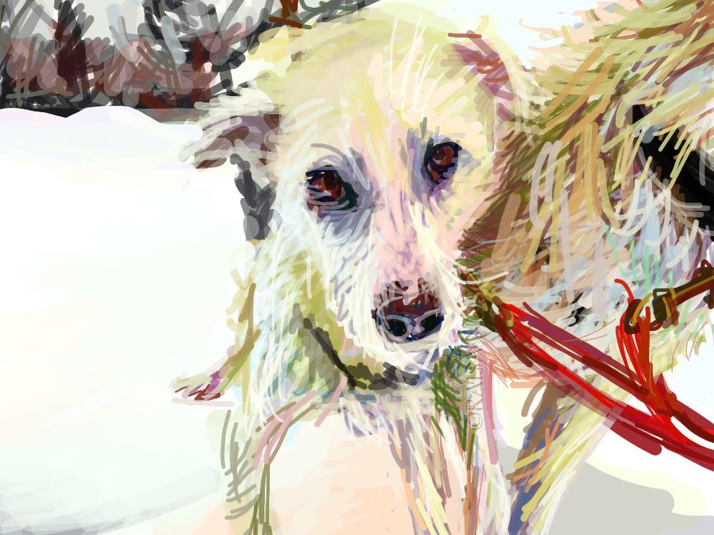 Huskies_site.jpg