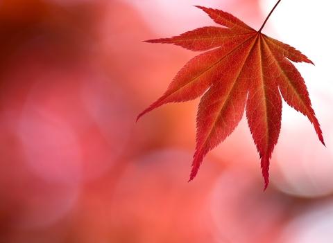 Child Leaf.jpg