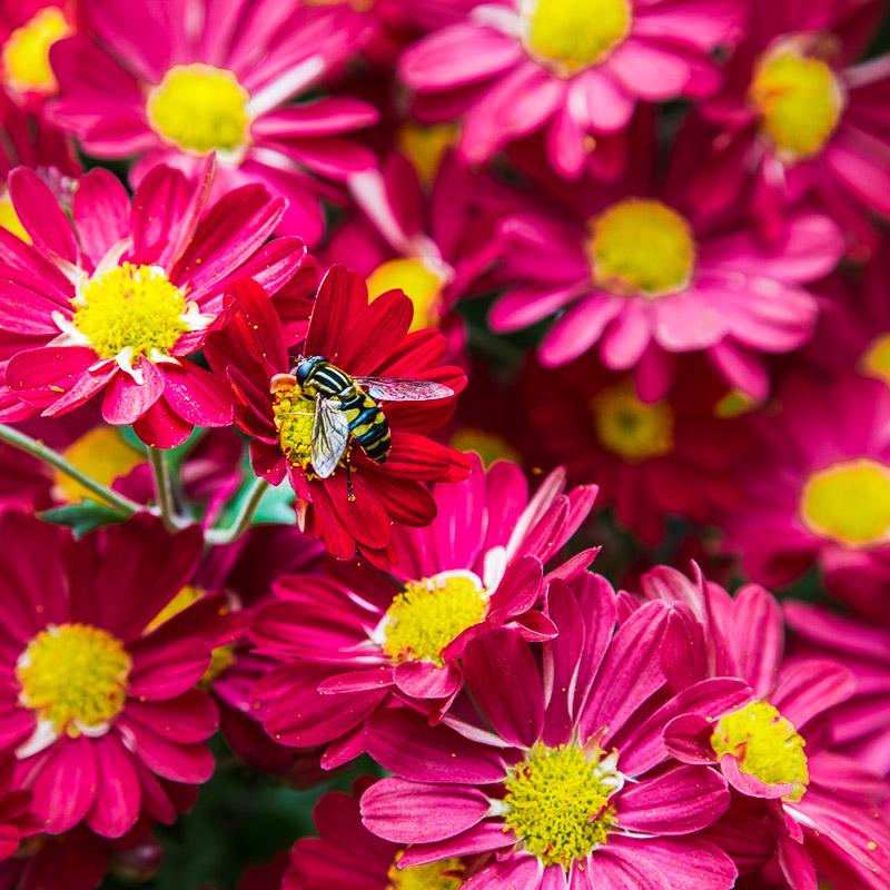 Bronx Botanical Garden-1378.jpg