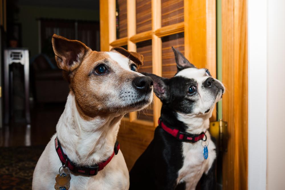 Ginger & Koko