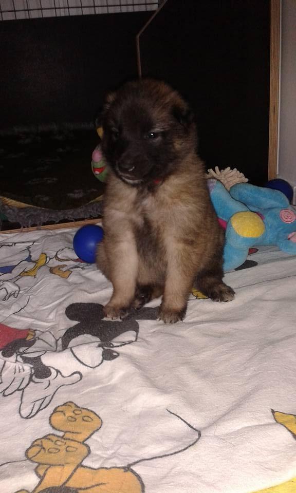 P-Wurf Fräulein Rot 35 Wochen alt.jpg