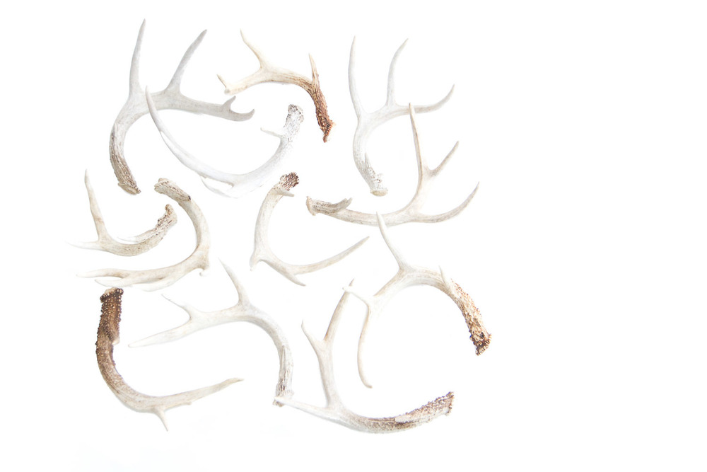 (PS-107) THE ANTLER COLLECTION