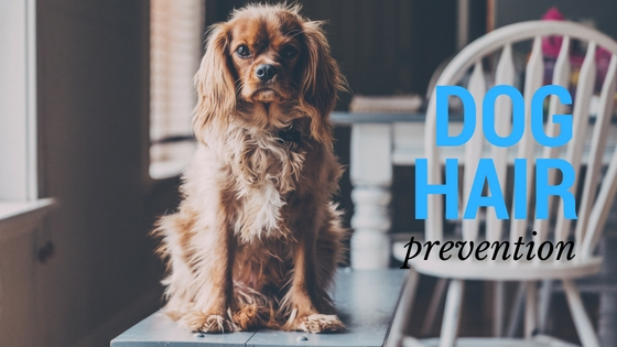 keep your home clean of dog hair