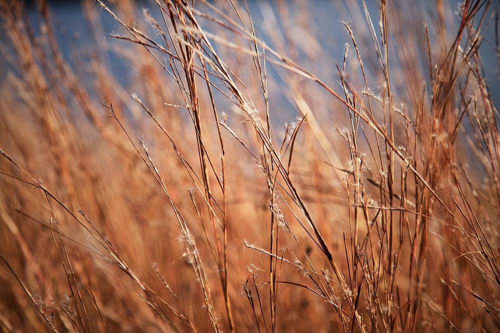 afternoon_gold_3.jpg