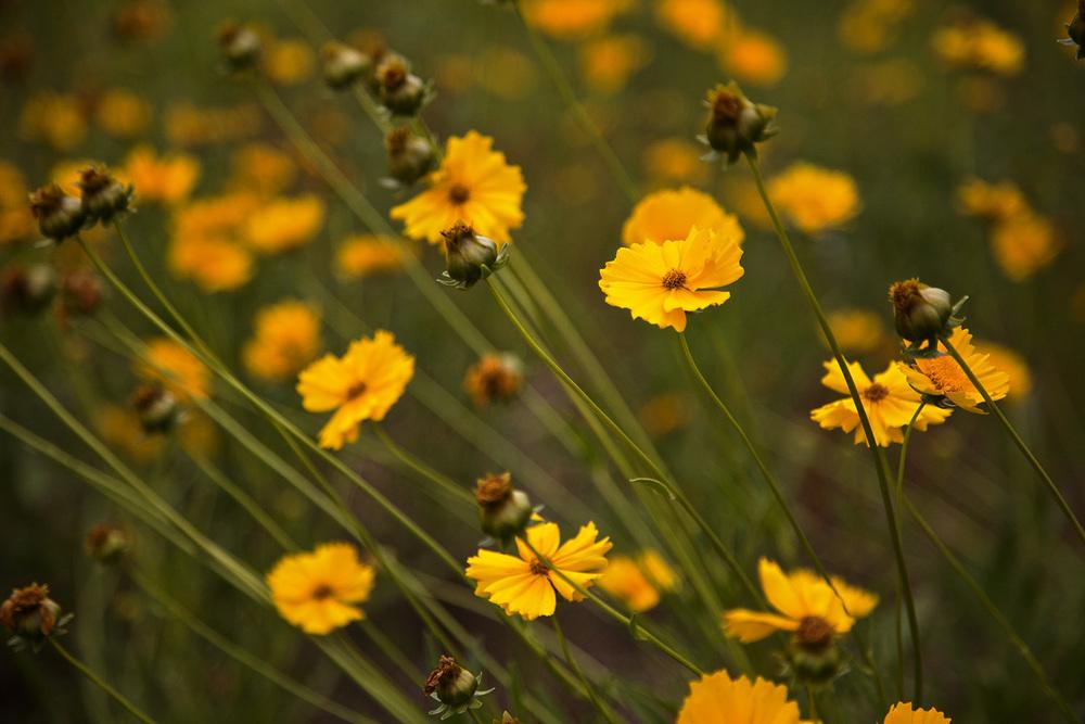 interstate_wildflowers.jpg