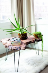Foolproof Houseplants For Every Window...