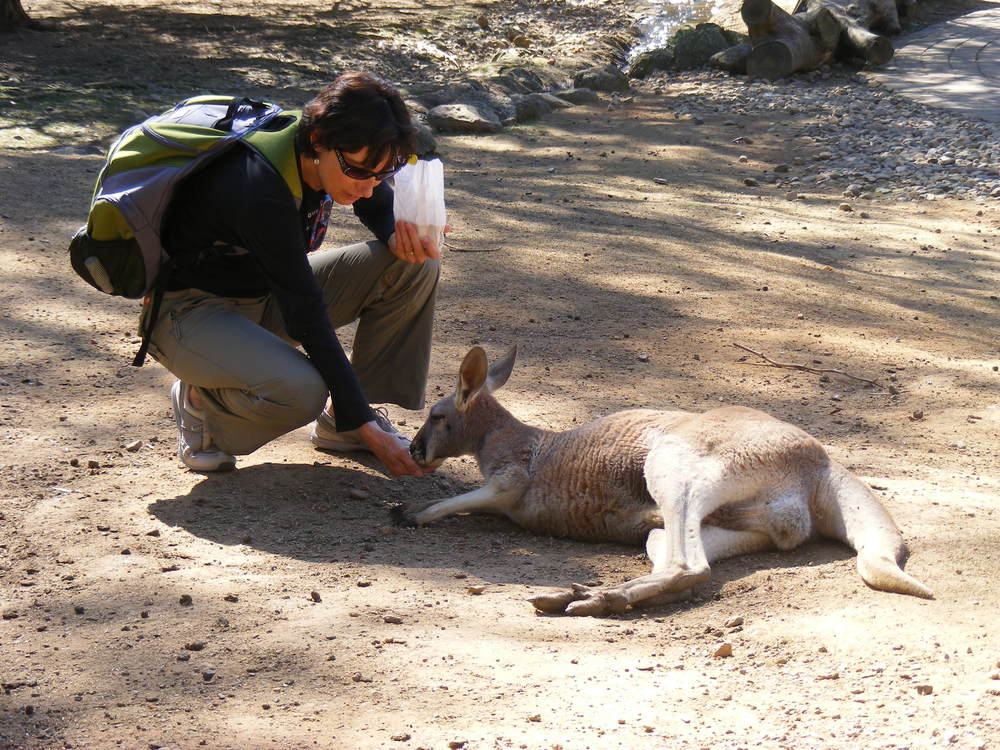 Kris feeding the Roos